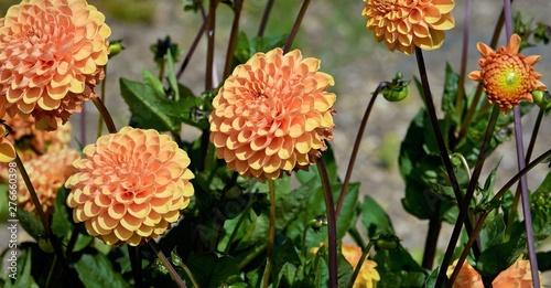Cadres-photo bureau Fleuriste fleurs