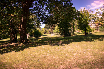 Scenic nature picture of trees and grass in Clyne gardens, Swansea
