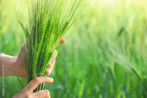 fototapeta na ścianę Female farmer in green wheat field, closeup