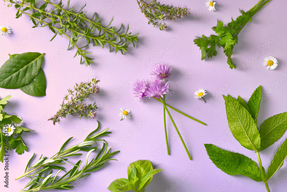 Fototapety, obrazy: top view on various aromatic fresh herbs with little daisies on pink background