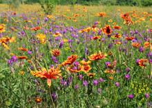 Wild Flowers On Meadow