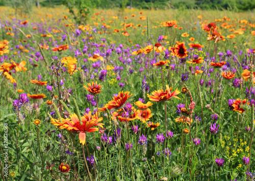 Fotografering wild flowers on meadow
