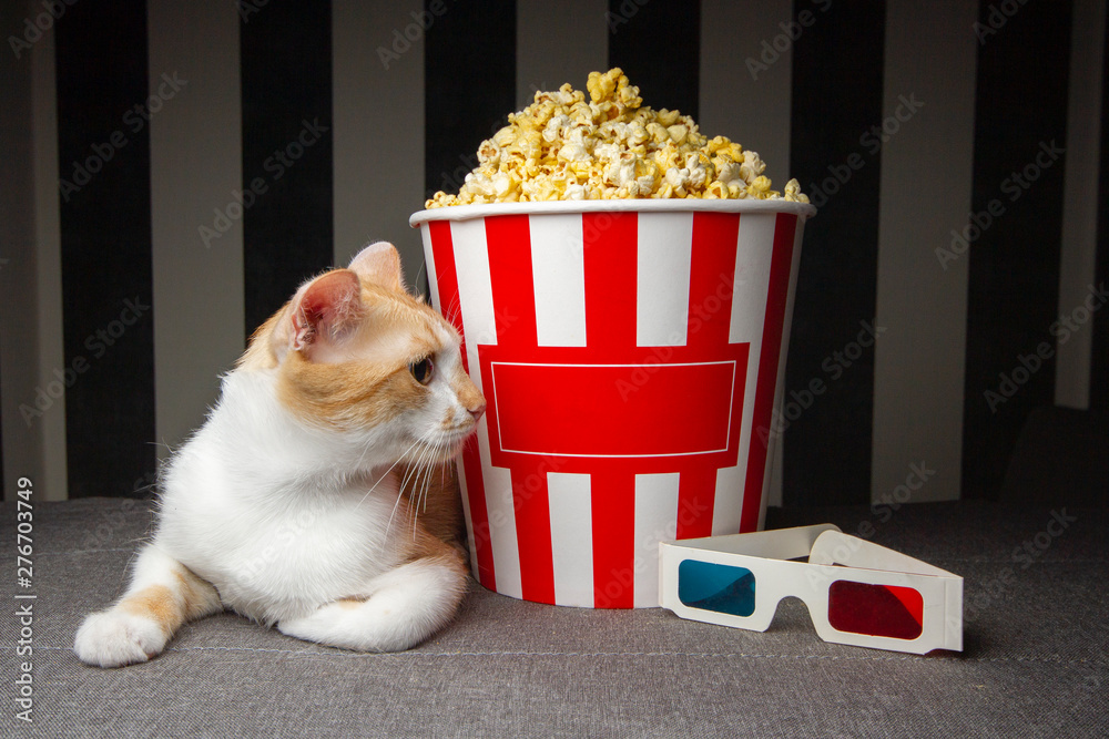 Fototapety, obrazy: cat lying on the couch with popcorn and watching television, he is resting in the evening in the room, copy space for text