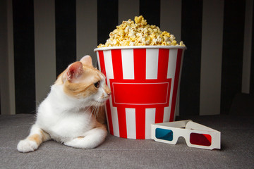 cat lying on the couch with popcorn and watching television, he is resting in the evening in the room, copy space for text