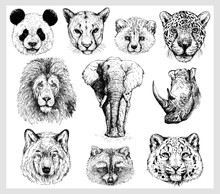 Set Of Hand Drawn Sketch Style Portraits Of Animals Isolated On White Background. Vector Illustration.