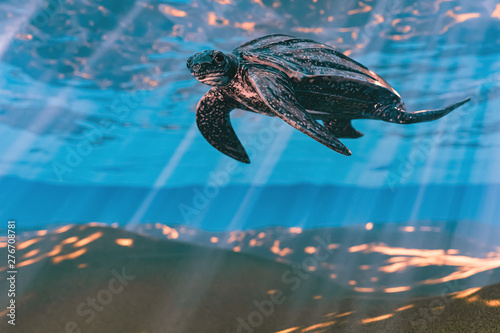 Photo  3d rendering of Leatherback sea turtle swimming in the shallow water