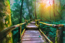 Green Moss And Wooden Bridge At Angka Nature Trail In Doi Inthanon National Park, Chaingmai,Thailand.