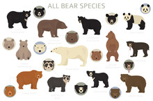 All World Bear Species In One ...