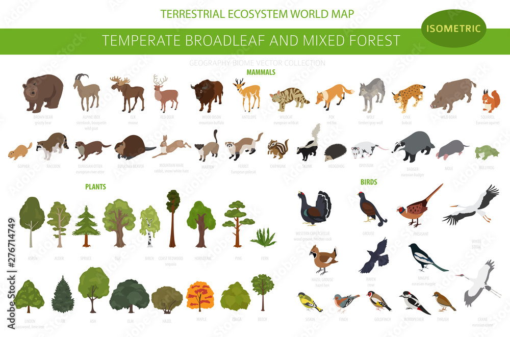 Fototapeta Temperate broadleaf forest and mixed forest biome. Terrestrial ecosystem world map. Animals, birds and plants set. 3d isometric graphic design
