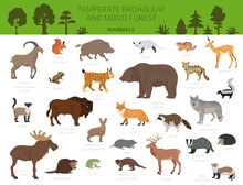 Temperate Broadleaf Forest And Mixed Forest Biome. Terrestrial Ecosystem World Map. Animals, Birds And Plants Graphic Design