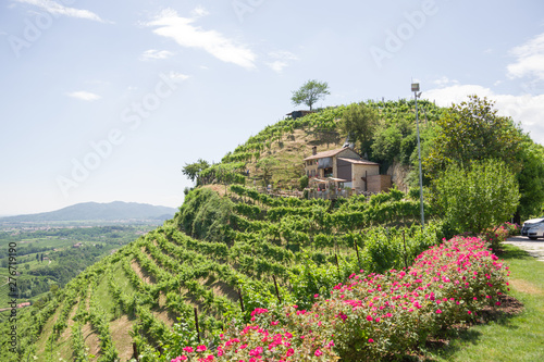 Fotografia  Treviso, Italy, 06/23/2019, View of the  Conegliano area famous for the production of prosecco wine, and the Col Vetoraz hill
