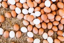 Fresh Domestic Eggs On Local F...