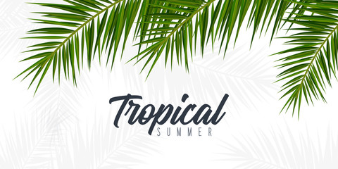 Ljeto tropskog lišća palme. Egzotično palmovo drvo. Cvjetna pozadina.