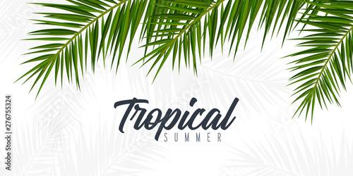 Fotografía Summer Tropical palm leaves