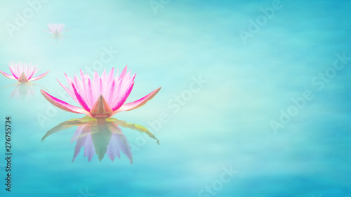 Garden Poster Lotus flower Lily water on the lake, Pink lotus flower on the water in the morning