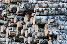 Wooden Cut Logs Background. Pi...
