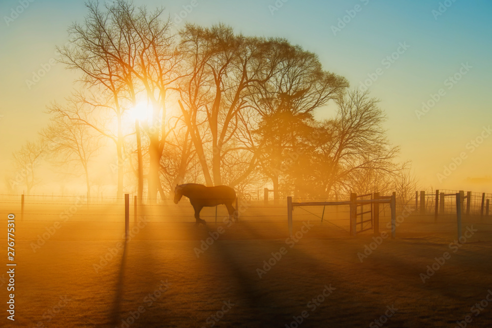 Fototapety, obrazy: Horse in the Sunlight at Daybreak with Fog
