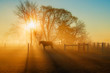 Horse in the Sunlight at Daybreak with Fog