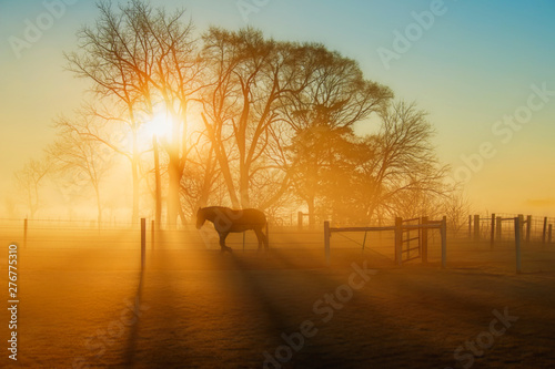 Poster Paarden Horse in the Sunlight at Daybreak with Fog