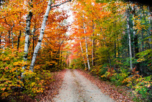 Old Dirt Road Fall In Upstate New York