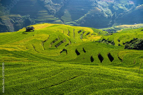 View Rice fields on terraced Vietnam at YenBai.Beautiful terraced rice field in harvest season in sunset in Mu Cang Chai