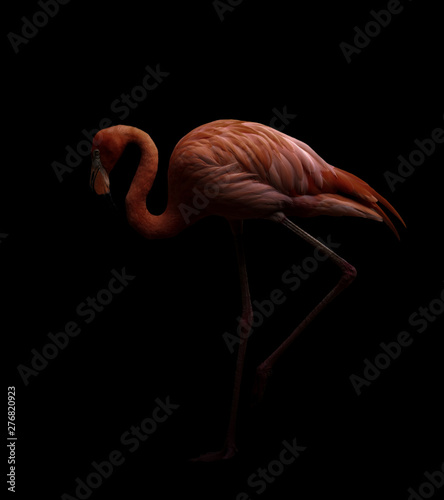 Garden Poster Flamingo american flamingo bird in dark backhround