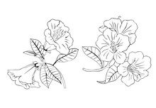 Black And White Drawing Of Rhododendron. Vector Design For Coloring.