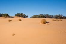 Sand Dunes And Tumbleweeds, Pe...