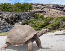 Turtle On Rock, Rodrigues, Trou D'Argent