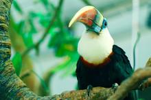 Toucan Bird Similar To Hornbi...