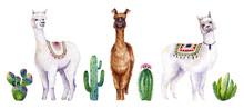 Set Of Watercolor Alpacas And ...