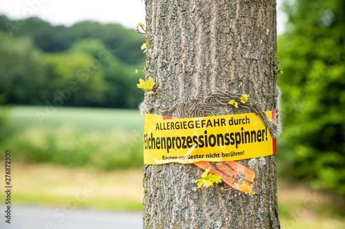 Fotografie, Obraz  tree with text vorsicht allergiegefahr durch eichenprozessionsspinner Raupen und