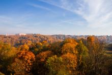 The Golden Forests Of Smolensk...