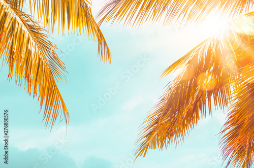 Tuinposter Palm boom Tropical palm tree with colorful bokeh sun light on sunset sky cloud abstract background.