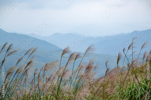 Green High mountain in border North of Viet Nam - Binh Lieu #276882593