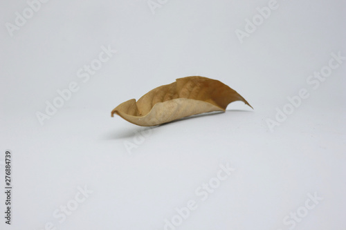 Photo dried leaves photographed with a white background, taken directly from nature, n
