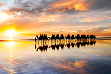 Silhouetted Camels Walking Along Cable Beach At Sunset In The North-west Town Of Broome, Western Australia, Australia. Camel Rides At Sunset Are A Popular Tourist Activity In Broome.