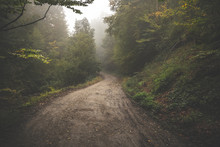 Road Through The Misty Woods.