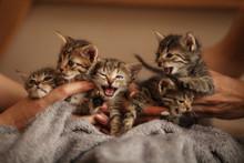 Brood Of Little Cute Kittens On Blanket. Care In Animal Shelter.