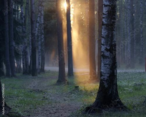 Fototapeten Wald Вечерний луч