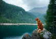 Nova Scotia Duck Tolling Retriever red dog on a mountain lake. Travel and hike with a pet.