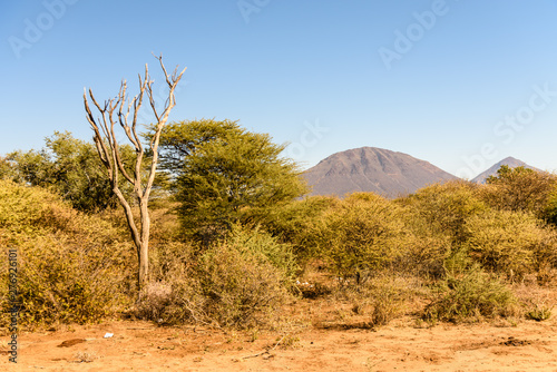 Dead tree among other trees dying from drought, Namibia Fototapeta