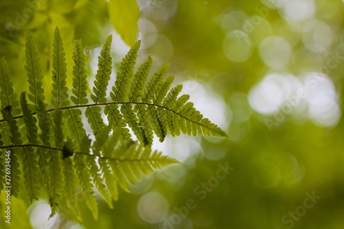 Obraz na plátně Beautiful green fern leaf on tender natural forest foliage blurred background bo