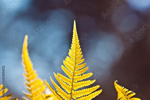 Fotografie, Obraz  young, fresh and healthy fern leaves on colourful natural forest and sky blurred