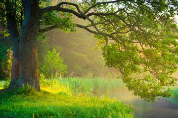 Panel Szklany Liście Summer green landscape