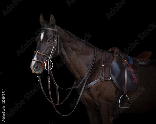 Photo  Portrait of a chestnut horse in sport style on black background isolated: bridle