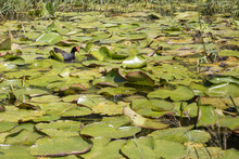 Pato E Planta No Lago