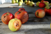Rotten Apples On A Log Table With