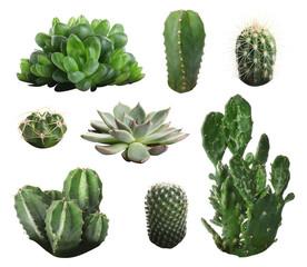 Prekrasan kaktus na bijeloj pozadini
