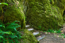 Lush Green Vegetation Shrouds Large Moss Covered Boulders Flanking Stone Steps Leading To A Narrow Path In A Pacific Temperate Rain Forest.